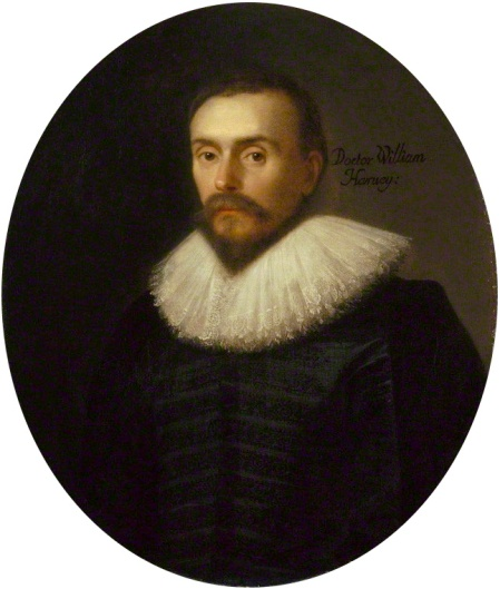 """William Harvey 2"" by Daniel Mytens - http://www.npg.org.uk/collections/search/largerimage.php?LinkID=mp02074&page=1&role=sit&rNo=0. Licensed under Public Domain via Commons."