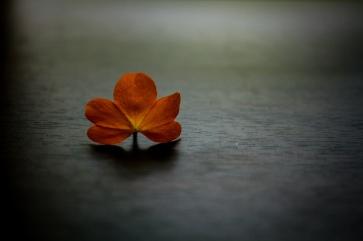 The Introvert. Melanie Lee on Flikr. https://www.flickr.com/photos/128032082@N06/15571194581