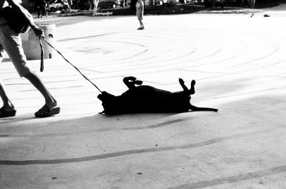 Stubborn dog. Daren on Flikr. https://www.flickr.com/photos/darenmiles/6181749948